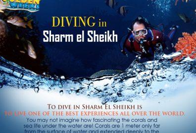 Golden Weeks Sharm el Sheikh Diving