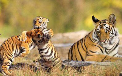 Sandeep Kalra Travel Blog