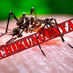 MGS Hospital medics advise on Chikungunya