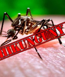 Chikungunya can cripple you. Medics advise getting immediate treatment