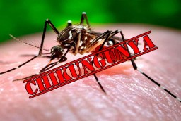 Chikungunya can cripple you. MGS Hospital medics advise getting immediate treatment