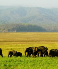 Jukaso Journey Suggests 5 Things to Make Your Corbett Getaway Truly Memorable!
